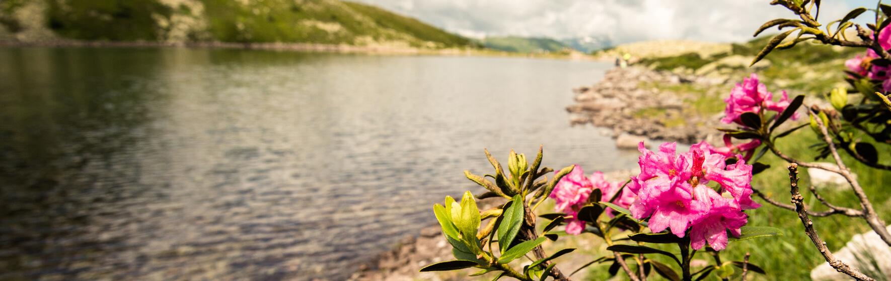 Bad Gastein Nationalpark Hohe Tauern